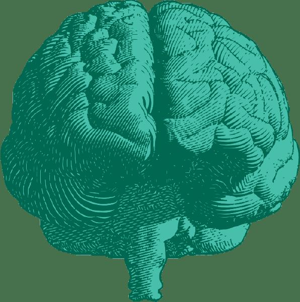 brain and stem